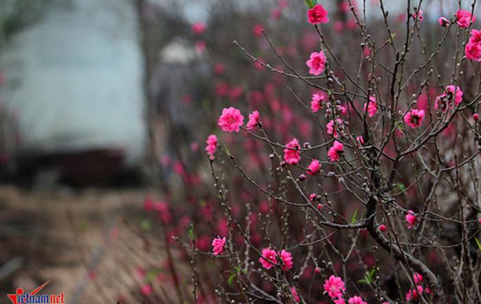 90 Mùa Xuân Đảng và khát vọng Việt Nam hùng cường